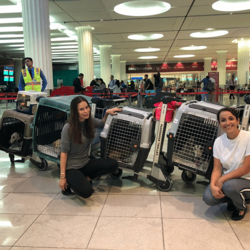Lucy, Max and Chester to Los Angeles, USA