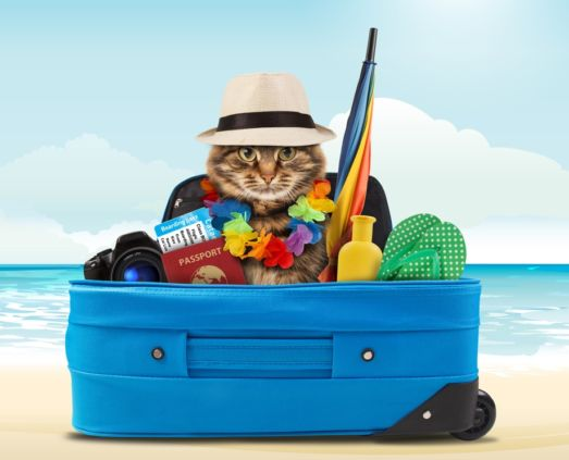 JetSet Pets - Pet Moving Services - Shipping - Pet Transport